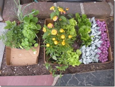 plants 5-1-10 003