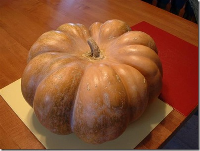 fairy tale pumpkin 003 (Small)