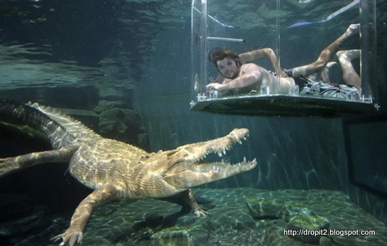 crocodile_cool things.jpg