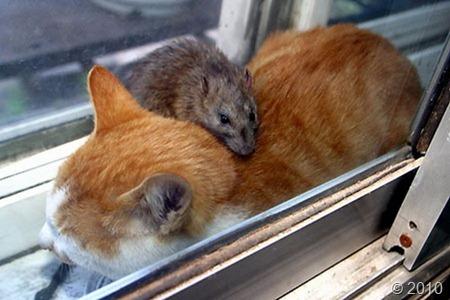 friendship-mouse-cat