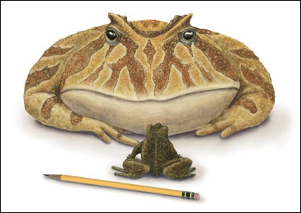 biggest-frog-picture