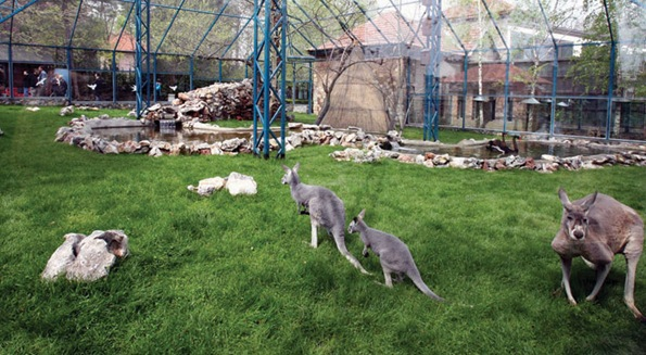 Belgrade zoo 02