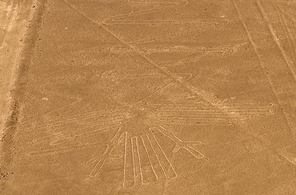Nazca_heron