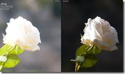 lr2_rose