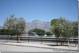 Mojave Desert-20