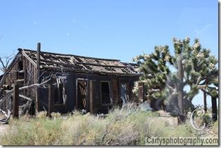 Mojave Desert-24