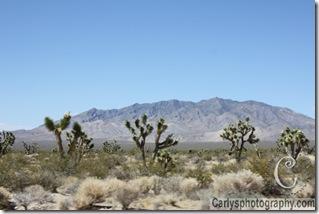 Mojave Desert-27