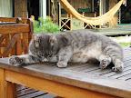 Viens no Chill Inn kaķiem
