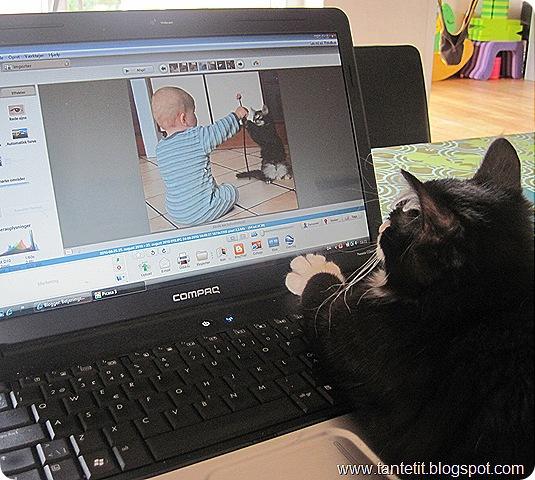"""Katten efter """"musen"""""""