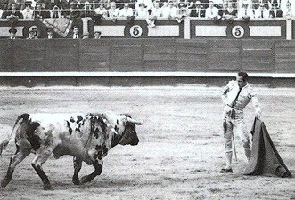 Antoñete toro blanco 001