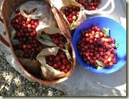 cherries_1_1