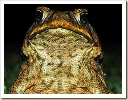 Mr__Frog_by_SirSpic