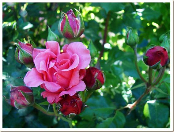 237 Flores