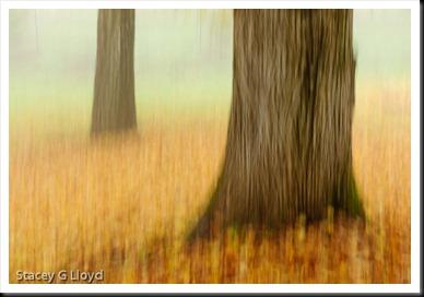 Blog_20101112_1-2