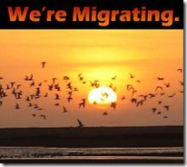 migrate small