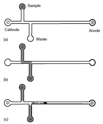 Schematic operation of a cross-injector used for DNA sample loading into a typical microdevice. The DNA sample is electrophoresed from the sample well to the waste well traveling, at least in part, through the separation channel. When the optimal loading time has been achieved, the voltages are switched, with the field now applied from one end of the separation channel to the other. This captures the DNA fragments that were in the separation channel at the time of the switch and begins the separation and detection process