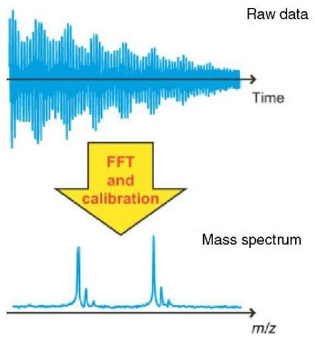 Schematic diagram showing the measured data of a FT-ICR experiment and the subsequent fast fourier transform (FFT) and calibration of the measured data into the final mass spectrum