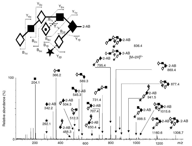 analysis of n and o linked glycans of glycoproteins