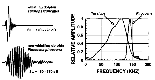 Typical echolocation signal emitted by T. truncatus (a whistling dolphin) and P. phocoena (a nomvhistling porpoise). The source level (SL) is the peak-to-peak sound pressure level referenced to 1 (j,Pa at 1 m.