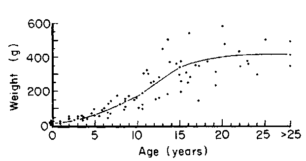 Weight of nonspermiogenic testes of walrus in relation to age.