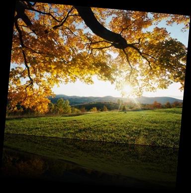 Lønneblad om høsten.