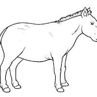 cavallo_miocene.jpg