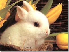 cute_baby_bunny