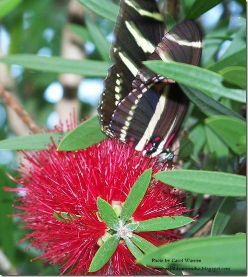 butterfly 003.JPG