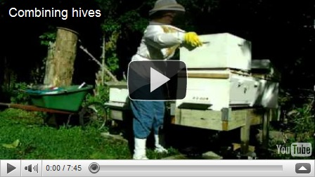 how to get rid of bumble bees under my deck