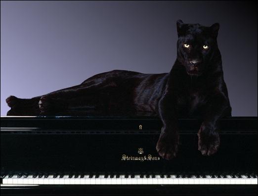Piano/Forte - cap. 2