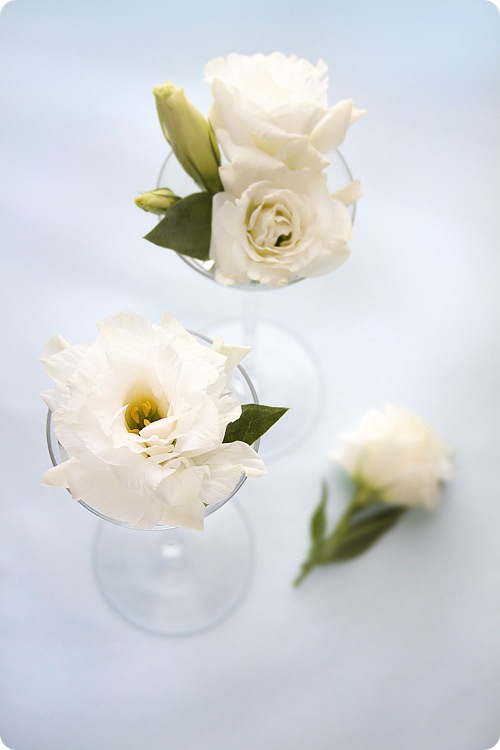 White Chinese Roses
