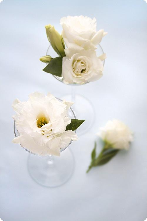 White Chinese Roses