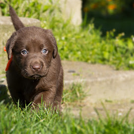 by Tomas Canon - Animals - Dogs Puppies
