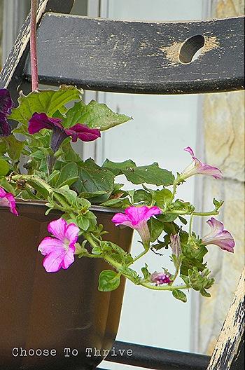 planter.16b