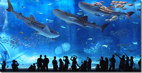 okinawa_churaumi_aquarium