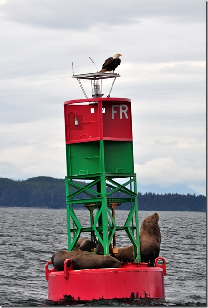 eagle and seals