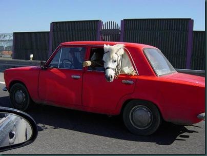 Лошадка в Жигулях, вид сбоку
