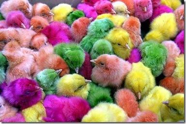 Раскрашенные цыплята