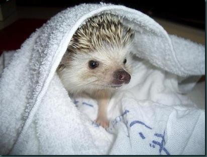 Ёжик в полотенце