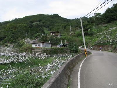 2009-1010-081849.JPG