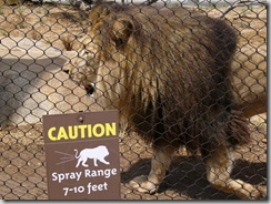 lion warning