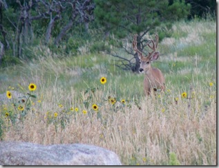 cheyenne mtn cmpgrnd deer