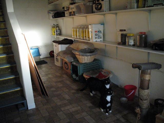 装修后-地下室-猫猫居住那半边,另外半边是新办公室