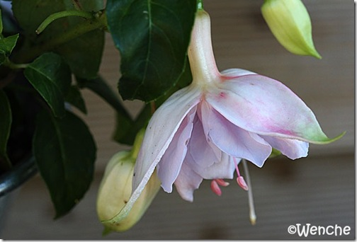 Hollys Beauty