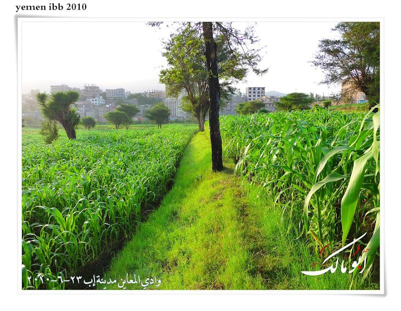 عاصمة السياحة اليمنية إب الخضرا %D8%A7%D9%85%D8%B7%D8%A7%D8%B128o