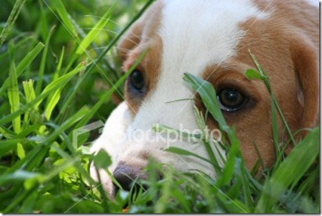 istockphoto_1125127-puppy-hiding-in-grass