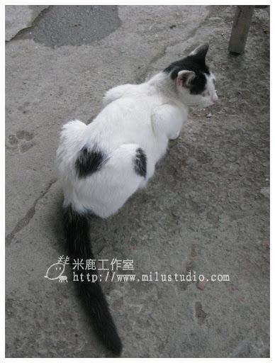 20100621-cats-50.jpg