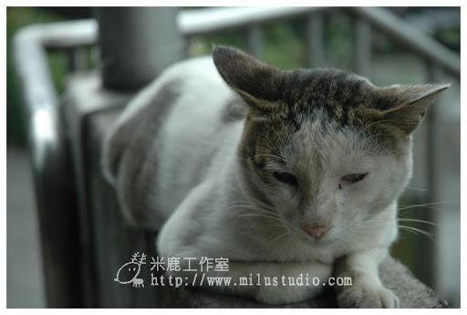 20100621-cats-14.jpg
