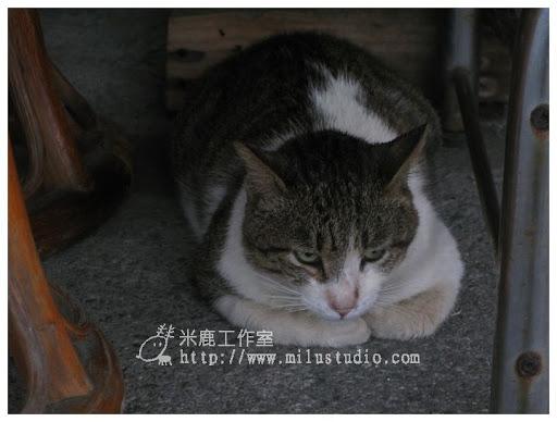 20100621-cats-38.jpg