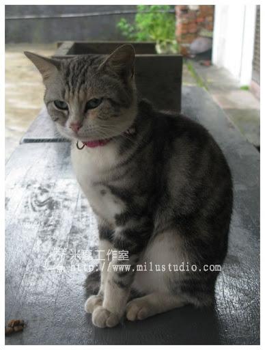 20100621-cats-40.jpg